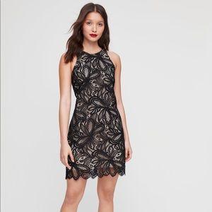 BABATON   Henry Lace Sleeveless Dress Black Size 4
